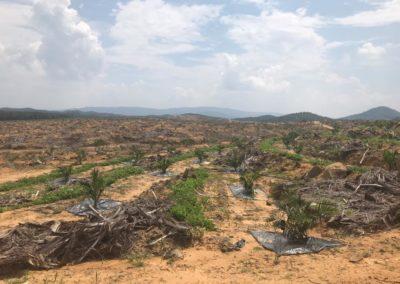 projek kebun durian (1)