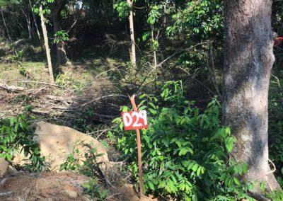update Jun 2020_durian progress 10