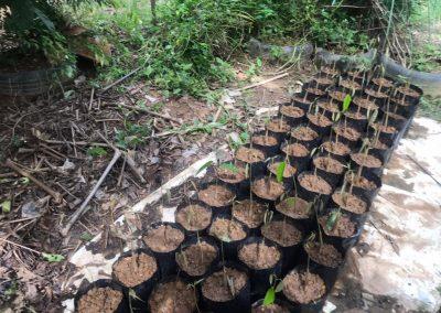 news okt 2020 - durian farm 12