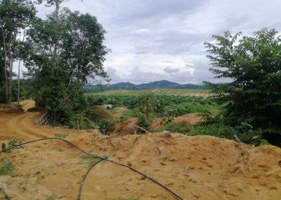news okt 2020 - durian farm 5
