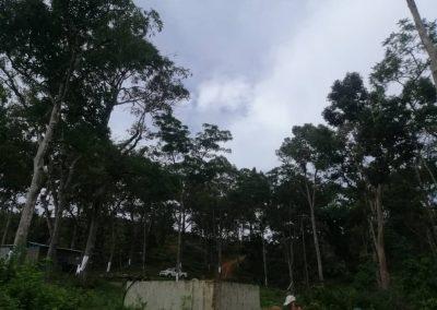 news okt 2020 - durian farm 7