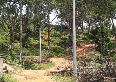 news okt 2020 - durian farm 9